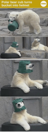 Polar bear cub turns  bucket into helmet Finally some good news