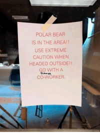 Animals, Bear, and Polar Bear: POLAR BEAR  IS IN THE AREA!!  USE EXTREME  CAUTION WHEN  HEADED OUTSIDE!!  GO WITH A  CO-WORKER That is technically a solution. #PolarBear #Animals #FunnySigns #Caution
