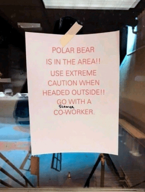 Bear, Polar Bear, and Extreme: POLAR BEAR  IS IN THE AREA!!  USE EXTREME  CAUTION WHEN  HEADED OUTSIDE!!  GO WITH A  CO-WORKER Slower