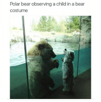 Polar bear observing a child in a bear  Costume