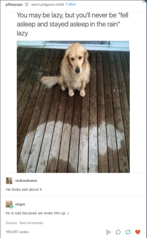 """Lazy, Memes, and Best: pOlarpopssmol-pidgeon-child Follow  You may be lazy, but you'll never be """"fell  asleep and stayed asleep in the rain""""  lazy  vickondrums  He looks sad about it  virgro  he is sad because we woke him up :(  Source: best-of-memes  169,697 notes lazy"""