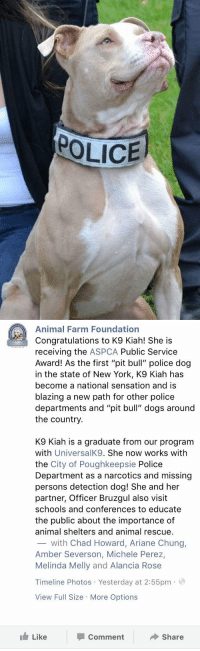"""Memes, New York, and Sensational: POLICE   Animal Farm Foundation  Congratulations to K9 Kiah! She is  receiving the  ASPCA Public Service  Award! As the first """"pit bull"""" police dog  in the state of New York, K9 Kiah has  become a national sensation and is  blazing a new path for other police  departments and """"pit bull"""" dogs around  the country  K9 Kiah is a graduate from our program  with  UniversalK9. She now works with  the City of Poughkeepsie Police  Department as a narcotics and missing  persons detection dog! She and her  partner, Officer Bruzgul also visit  schools and conferences to educate  the public about the importance of  animal shelters and animal rescue.  with Chad Howard, Ariane Chung,  Amber Severson, Michele Perez,  Melinda Melly and Alancia Rose  Timeline Photos Yesterday at 2:55pm  a  View Full Size More Options  Like  Share  Comment First Pit Bull police dog in New York!"""