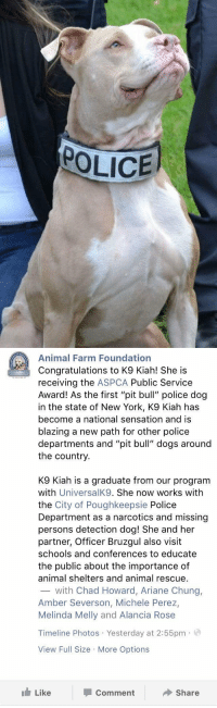 """Dogs, New York, and Police: POLICE   Animal Farm Foundation  Congratulations to K9 Kiah! She is  receiving the  ASPCA Public Service  Award! As the first """"pit bull"""" police dog  in the state of New York, K9 Kiah has  become a national sensation and is  blazing a new path for other police  departments and """"pit bull"""" dogs around  the country  K9 Kiah is a graduate from our program  with  UniversalK9. She now works with  the City of Poughkeepsie Police  Department as a narcotics and missing  persons detection dog! She and her  partner, Officer Bruzgul also visit  schools and conferences to educate  the public about the importance of  animal shelters and animal rescue.  with Chad Howard, Ariane Chung,  Amber Severson, Michele Perez,  Melinda Melly and Alancia Rose  Timeline Photos Yesterday at 2:55pm  a  View Full Size More Options  Like  Share  Comment First Pit Bull police dog in New York! https://t.co/0Y4n0q6zF4"""