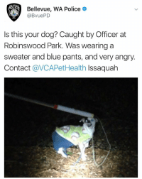 Who Doggo is this @doggosdoingthings: POLICE  Bellevue, WA Police  (a BVuePD  1953  Is this your dog? Caught by Officer at  Robinswood Park. Was wearing a  sweater and blue pants, and very angry  Contact  av CAPetHealth Issaquah Who Doggo is this @doggosdoingthings