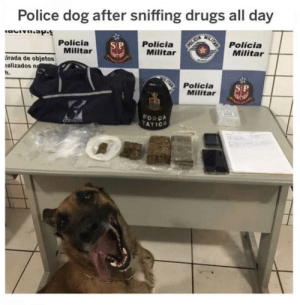 Drugs, Police, and Dog: Police dog after sniffing drugs all day  MILTAR  Polícia  Militar  Polícia  Militar  Polícia  Militar  S P  POLICIA  rada de objetos  alizados n  h.  Polícia  Militar  SP  FORCA  TATICA  COMETE  An I feel you