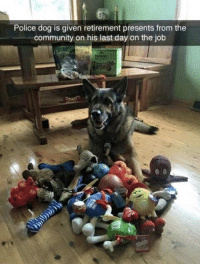 Community, Police, and Boy: Police dog is given retirement presents from the  community on his last day on the job The goodest boy