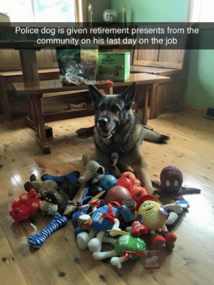 tastefullyoffensive:The goodest boy. (via snipeymcsnipe): Police dog is given retirement presents from the  community on his last day on the job  DOGGY  mm tastefullyoffensive:The goodest boy. (via snipeymcsnipe)