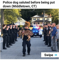 Memes, Police, and 🤖: Police dog saluted before being put  down (Middletown, CT)  Swipe . 😢 💔 | follow @fuckersbelike for more