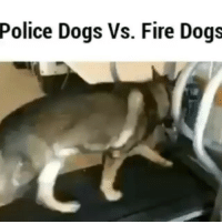 Police Dogs Vs. Fire Dogs Sent in by @american_cops CopHumor CopHumorLife Humor Funny Comedy Lol Police PoliceOfficer ThinBlueLine Cop Cops LawEnforcement LawEnforcementOfficer K9 Dog DogsOfInstagram PoliceDog FireDog