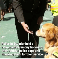 Memes, Party, and Police: Police in Ecuador held a  retirement ceremonv honoring  their faithful police dogsa  thanking them for their service. This is the only retirement party I want to go to. @abcnews