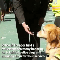 Dogs, Memes, and News: Police in Ecuador held a  retirement ceremony honoring  their faithful police dogs an  thanking them for their service.  ing  hanking the Repost @theworldpolice ・・・ more news like this @abcnews • servicedogs k9officers dogsretired precious gooddogs ecuador policedogs ILoveDogs BePawsitive🐾