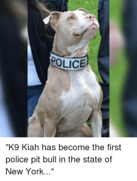 "Memes, New York, and Police: POLICE  ""K9 Kiah has become the first  police pit bull in the state of  New York Amazing Achievement! Please support our brothers in arms Police Magazine for more K9 & Police related posts!"