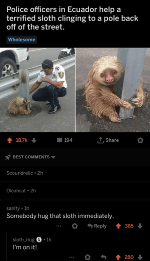 Police officers in Ecuador help a  terrified sloth clinging to a pole back  off of the street.  Wholesome  194  Share  BEST COMMENTS ▼  Scoundrelic 2h  Olealicat 2h  sanity lh  Somebody hug that sloth immediately  Reply 385  sloth_hug S.1h  I'm on it! Sloth needs a hug