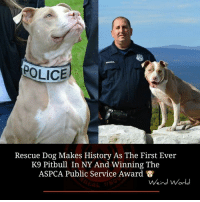 Memes, Police, and Pitbull: POLICE  Rescue Dog Makes History As The First Ever  K9 Pitbull In NY And Winning The  ASPCA Public Service Award  Weird World