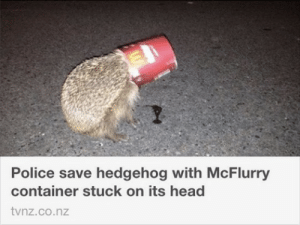 God, Head, and Police: Police save hedgehog with McFlurry  container stuck on its head  tvnz.co.nz unclefather:Thank god