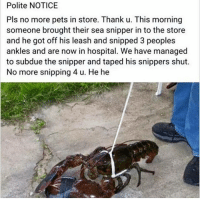 Pls No: Polite NOTICE  Pls no more pets in store. Thank u. This morning  someone brought their sea snipper in to the store  and he got off his leash and snipped 3 peoples  ankles and are now in hospital. We have managed  to subdue the snipper and taped his snippers shut.  No more snipping 4 u. He he