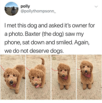 @dogsbeingbasic is a must follow for all animal lovers!!: polly  @pollythompsonn_  I met this dog and asked it's owner for  a photo. Baxter (the dog) saw my  phone, sat down and smiled. Again,  we do not deserve dogs @dogsbeingbasic is a must follow for all animal lovers!!