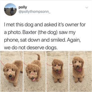 Good boi!: polly  @pollythompsonn_  I met this dog and asked it's owner for  a photo. Baxter (the dog) saw my  phone, sat down and smiled. Again,  we do not deserve dogs Good boi!