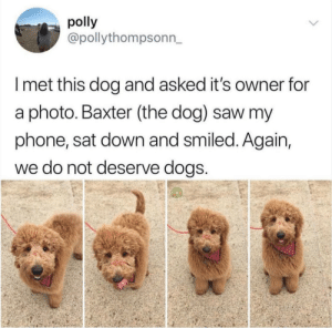 Dogs, Phone, and Saw: polly  @pollythompsonn,  I met this dog and asked it's owner for  a photo. Baxter (the dog) saw my  phone, sat down and smiled. Again,  we do not deserve dogS We really dont deserve them
