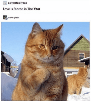Caturday, Fresh, and Love: polyglotplatypus  Love Is Stored in The You  moonpaw Get In The Caturday Mewd With These 30 Fresh Cat Memes - I Can Has Cheezburger?