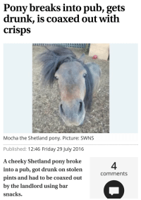 Me irl: Pony breaks into pub, gets  drunk, is coaxed out with  crisps  Mocha the Shetland pony. Picture: SWNS  Published: 12:46 Friday 29 July 2016  A cheeky Shetland pony broke  into a pub, got drunk on stolen  Comments  pints and had to be coaxed out  by the landlord using bar  snacks. Me irl