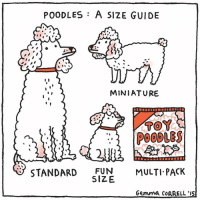 🐩🐩🐩 comics: POODLES: A SIZE GUIDE  MINIATURE  t s  TOY  STANDARD  FUN  MULTI PACK  SIZE  Gemma COARELL'IS 🐩🐩🐩 comics
