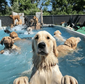 Pool Party: Pool Party