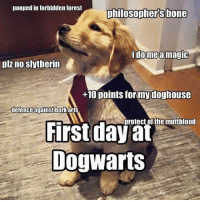 Bones, Memes, and Poop: pooped in forbidden forest  philosophers bone  i do mea magic  plz no slytherin  +10 points for my doghouse  defence against barka  protect of the muttblood  First day at  Dog Warts
