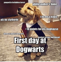 Bones, Dogs, and Memes: pooped in forbidden forest  philosophers bone  ome a magic  plz no slytherin  +10 points for my doghouse  defence against bark arts  protect of the muttblood  First day at  Dog Warts