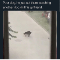 Funny, My Nigga, and Girlfriend: Poor dog, he just sat there watching  another dog drill his girlfriend. LET MY NIGGA OUT THE CRIB NOW NIGGA!!!! @larnite • ➫➫➫ Follow @Staggering for more funny posts daily!