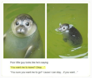 """Cute as fuck: Poor little guy looks like he's saying  You want me to leave? Okay...  """"You sure you want me to go? 'cause I can stay... f you want. Cute as fuck"""