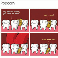Cats, Crazy, and Dogs: Popcorn  hey, popcorn kernel,  you can't be here!  quiet, narc!  I live here now! DOUBLE TAP😍Swipe left🔥 follow @IJFXL (Me) for more! 📣Turn on post notifications 📣 ➖➖➖➖➖➖➖➖➖➖➖➖➖➖➖➖ ✔ Follow my backup account: @I.J.F.X.L ➖➖➖➖➖➖➖➖➖➖➖➖➖➖➖➖✔️ 🚫 Hashtags (ignore) 🚫 gaming gamer meme drake dog dogs cat cats trump 2017 battlefield battlefield1 gta gtav gta5 gtavonline comedy savage humor gamers Relatable Hilarious KimKardashian KylieJenner Squad Crazy Omg Epic friendzone