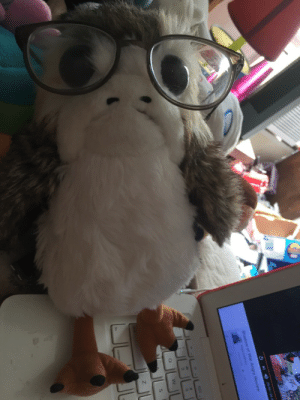 Tumblr, Blog, and Glasses: porgs-n-ponchos: Took this before I found your blog. Baby decided to try on my glasses while I was half asleep. I think it suits him! the smartest most handsome porg!