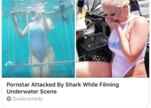 Respect, Target, and Thot: Pornstar Attacked By Shark While Filming  Underwater Scene  Dudecomedy the-realest-asami:  poz-load-stealth-bomber: underwater thot patrol mad respect for my niggas in the deep blue sea