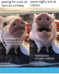 """Friday, Friends, and Memes: posing for a pic at same night, but at  7pm on a Friday :37am  """"i am ready for a  holesome night  out with friends""""  치NCOHERENT  ALCOHOL SHRIEKS*  @barkbox  @annalisasalundaroo ITS PIG WEEK, YALL That's right. Not PUG week. PIG week. Why? CAUSE WE WANNA, and because we found out we have quite a few pig subscribers????????? So, this week 🐷 EMBRACE THE PIG 🐷 LIKE THE PIG 🐷 FOLLOW THE PIG and us, jeez 🐷 HUG A CONSENTING PIG pigweek pigsofinstagram CONSENTINGPIG DontAtUsPugs WeLoveYouToo"""