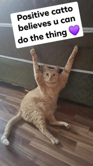Reaction memes 2/***: Positive catto  believes u can  do the thing Reaction memes 2/***