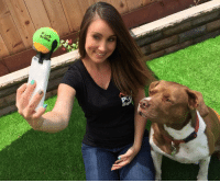 Memes, Phone, and Tumblr: positive-memes:This phone attachment helps you take selfies with your dog meirl