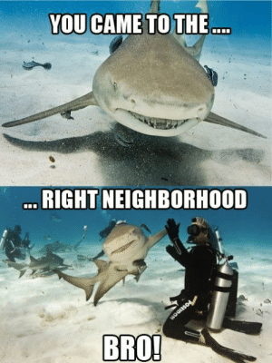 positive-memes:  When you finally find the right Subrebbit!  SHARK FRIEND: positive-memes:  When you finally find the right Subrebbit!  SHARK FRIEND