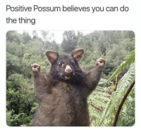 https://t.co/zyF9ueP99p: Positive Possum believes you can do  the thing https://t.co/zyF9ueP99p