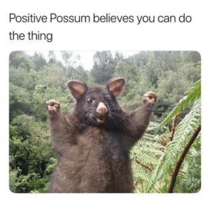 I believe in you via /r/wholesomememes https://ift.tt/32ZC7yf: Positive Possum believes you can do  the thing I believe in you via /r/wholesomememes https://ift.tt/32ZC7yf