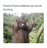 Good, Possum, and Luck: Positive Possum believes you can do  the thing  SP Pass on the possum for good luck! 😂