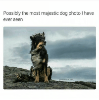 Memes, Ted, and 🤖: Possibly the most majestic dog photo have  ever seen  @hilarious ted Agreed majesticaf👑