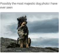 Memes, Ted, and 🤖: Possibly the most majestic dog photo have  ever seen  @hilarious ted