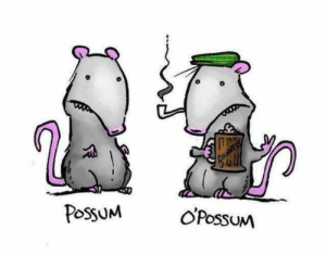 Dank, Possum, and 🤖: PossuM OPossuM