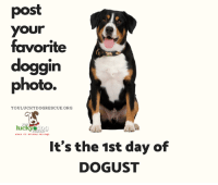 Memes, Summer, and Luck: post  your  favorite  doggin  photo.  YOULUCKYDOGRESCUE.ORG  luck  bere it's all about the degs  It's the 1st day of  DOGUST It's the 1st day of DOGUST! Show us your favorite DOGGIN photo to celebrate the Dog Days of Summer!  info@youluckydogrescue.org www.youluckydogrescue.org