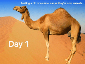 me🐪irl: Posting a pic of a camel cause they're cool animals  Day 1 me🐪irl
