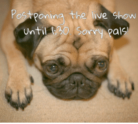 Gotta postpone the live show until 1:30, but here's a puppy picture of me for now. puglife puglove pugsnotdrugs pugsofinstagram petstagram dogsofinstagram dog pug pugstagram pugnation pugsandhugs pugsandkisses furbaby seniordog instapug pugaholic pugloversofinsta dogs dogstagram pugs instadog: Postponing the live show  Until L80. Sorry pals  O. Sorry Pa  ls! Gotta postpone the live show until 1:30, but here's a puppy picture of me for now. puglife puglove pugsnotdrugs pugsofinstagram petstagram dogsofinstagram dog pug pugstagram pugnation pugsandhugs pugsandkisses furbaby seniordog instapug pugaholic pugloversofinsta dogs dogstagram pugs instadog