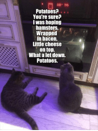 Top 21 Memes of The Week - Cheezburger Users Edition #57: Potatoes?.  Youre sure?  lwas hoping  hamsters.  Wrapped  in bacon.  Little cheese  . on top.  What a let down.  Potatoes. Top 21 Memes of The Week - Cheezburger Users Edition #57