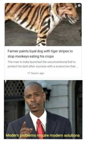 Rawr: /potBoess  Farmer paints loyal dog with tiger stripes to  stop monkeys eating his crops  The man in India launched the unconventional bid to  protect his land after success with a scarecrow that..  17 hours ago  Modern problems require modern solutions Rawr