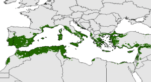 Potential distribution of the olive trees across the Mediterranean Basin Source: http://ow.ly/4tX930o6mH5: Potential distribution of the olive trees across the Mediterranean Basin Source: http://ow.ly/4tX930o6mH5